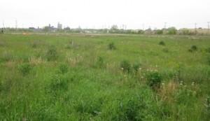 bryce-field