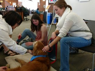 Dogs Help Student Stress Melt Away