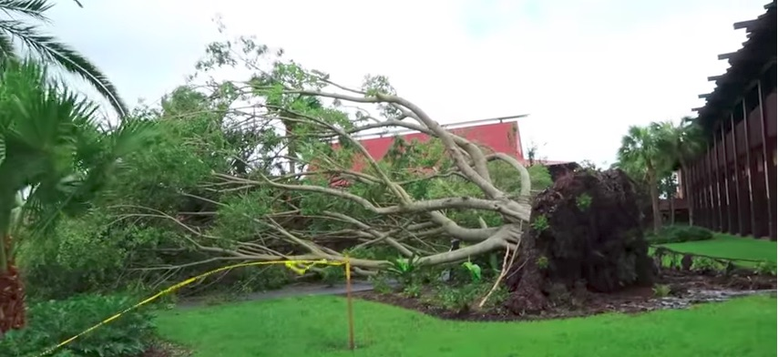 irma damage, hurricane irma, irma disney, irma orlando